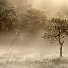 23.8.2013: August Morning II by Petri Volanen