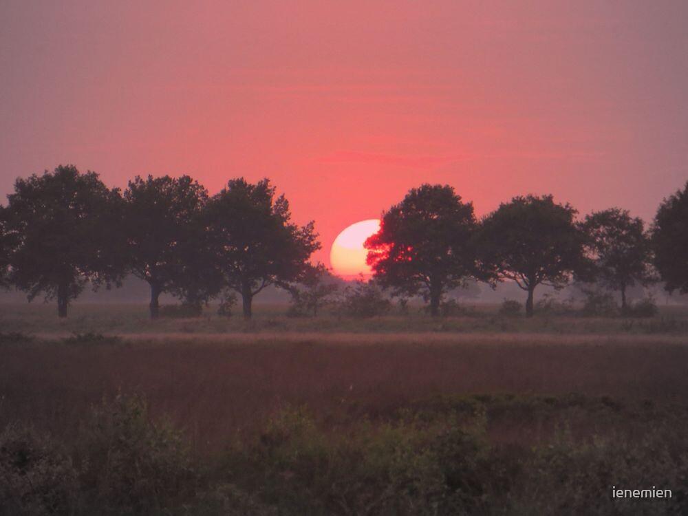 Summer Sunset by ienemien