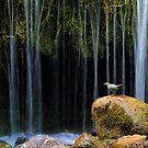 Bird Bath by Gene Praag