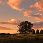 The Tree in the Field by vigor
