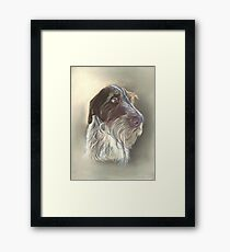 German Wire haired Pointer Framed Print