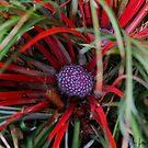 Gigha Grass by Sue Fallon Photography