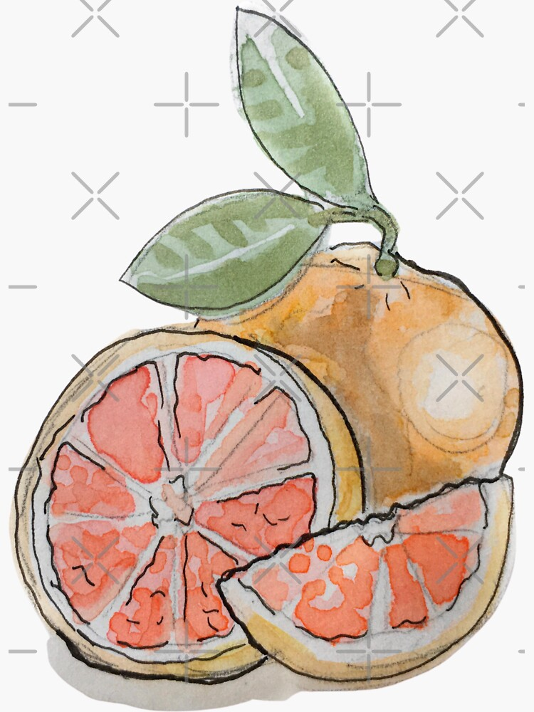 Sliced Grapefruit with Leaves Illustration in Watercolor by WitchofWhimsy