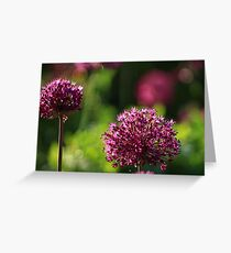 Light Beam Bokeh - Alium Flowers Greeting Card