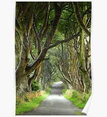 dark hedges Poster