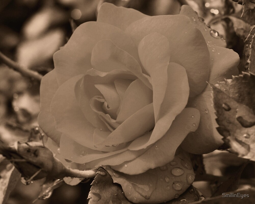 Sepia Rose Flower by SmilinEyes