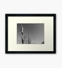 Graphite and Gray Framed Print