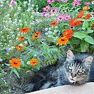 WHAT!   Flower Bed?  Not Kitty Bed? by seeya