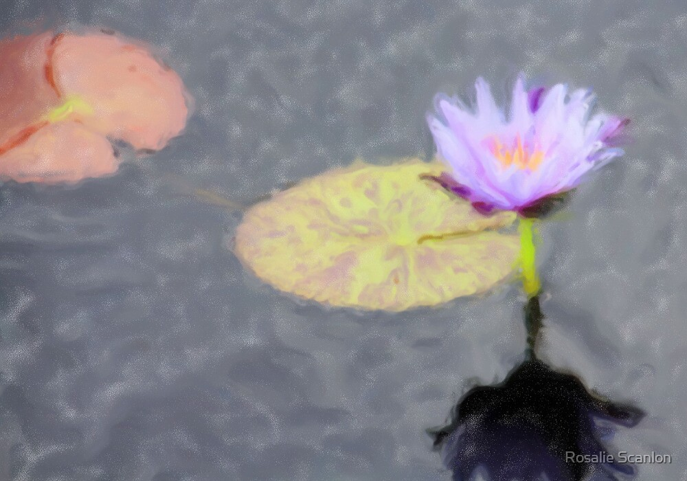 Water Lily Painted by Rosalie Scanlon