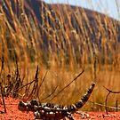 Young Thorny devil - Moloch horridus,  Uluru - Northern Territory by john  Lenagan
