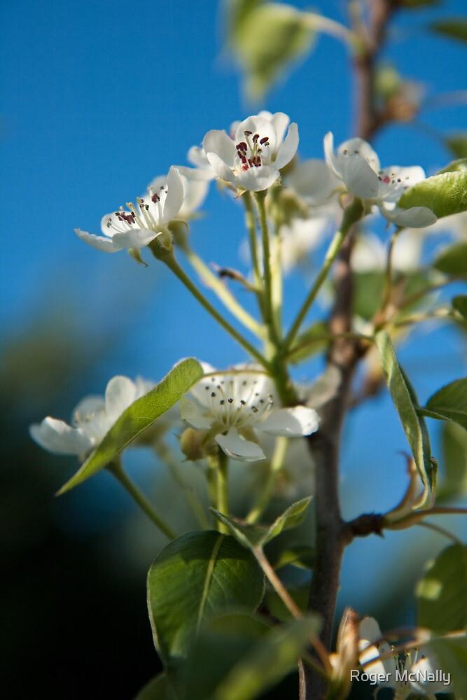 Summer Blossom by Roger McNally