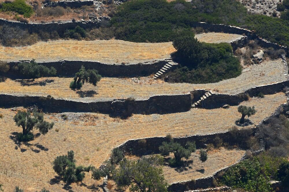 Sifnos - terracing by Ian Maclellan