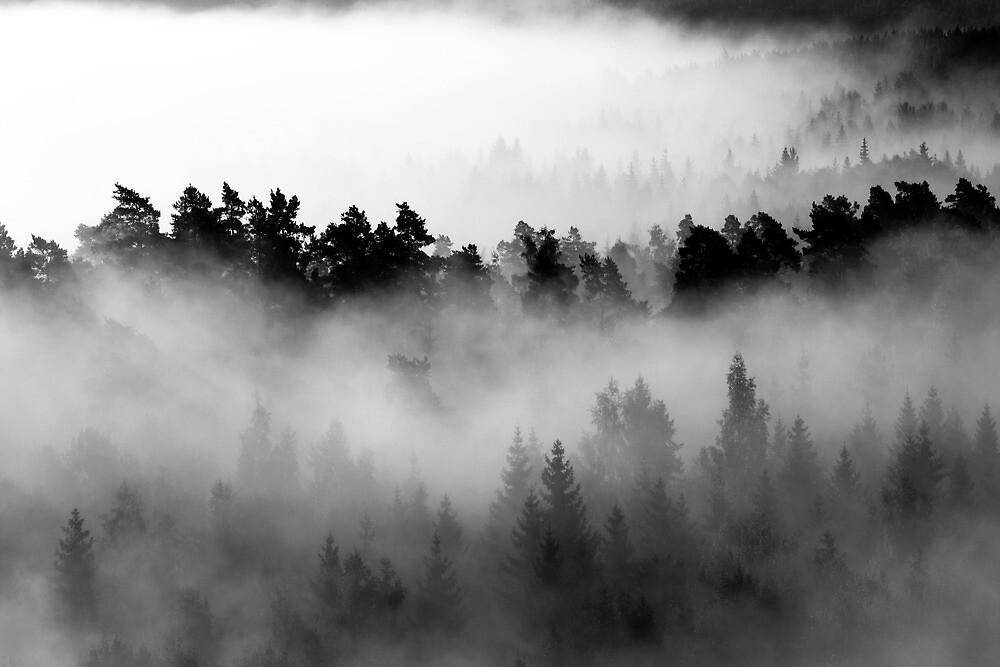 25.8.2013: Morning at Aulanko II by Petri Volanen