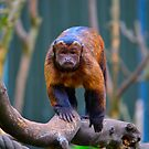 Monkey See... by Bami