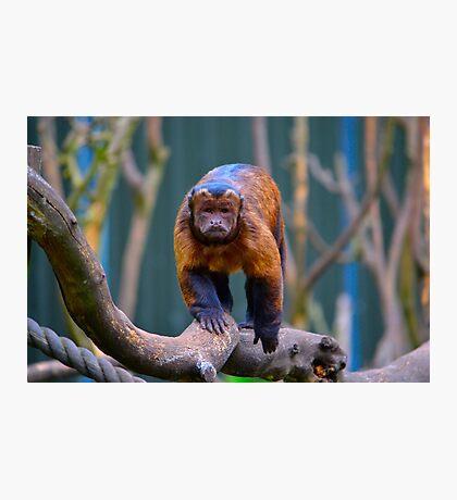 Monkey See... Photographic Print