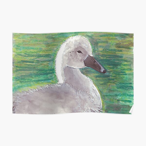Cygnet Painting Poster