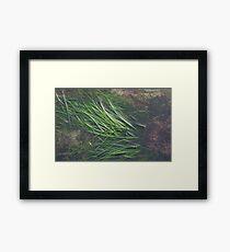 EAL GRASSES Framed Print