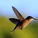 Delicate Dynamo - The Hummingbird by Raider6569