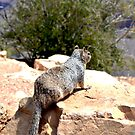 Squirrel overlooking the Grand Canyon by Prettyinpinks