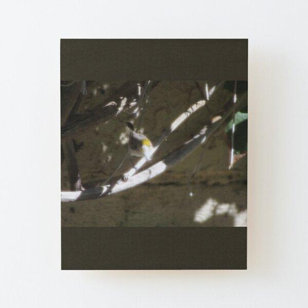 Small Verdin 2 Wood Mounted Print