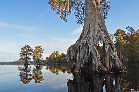 Dismal swamp grouping by Michele Conner