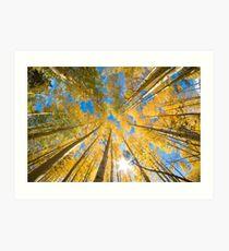 Aspen Trees Looking Up Art Print