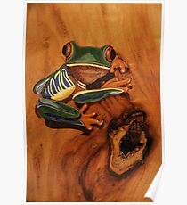 Pyrography: Red Eyed Tree Frog Poster