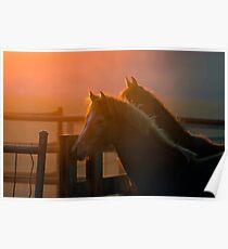 Sunset Fillies Poster