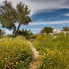 Trail of Spring by Uri Baruch