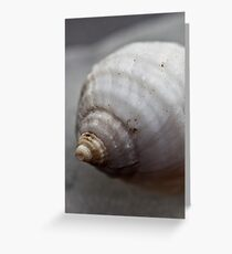 A shell that looks artificially made of alabaster Greeting Card