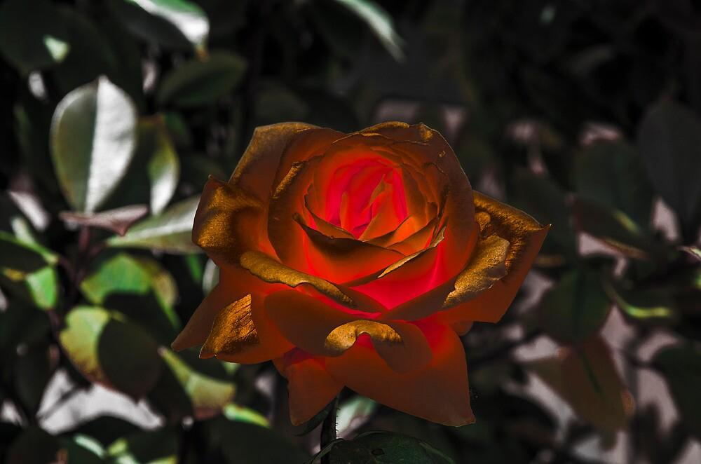 Golden Flower by Sotiris Filippou