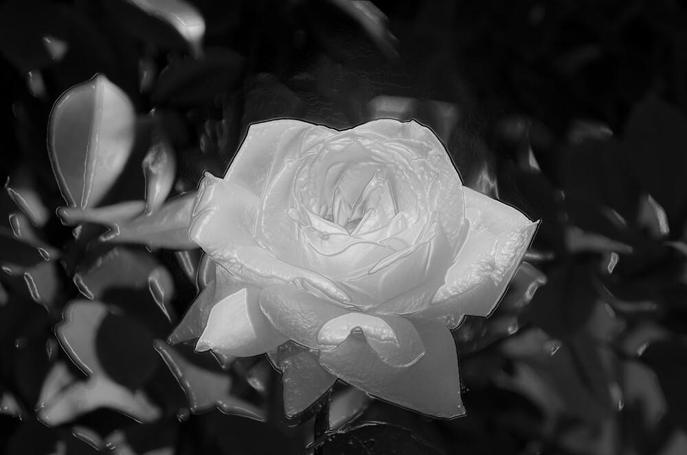 White Beauty by Sotiris Filippou