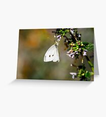 Butterfly Playground Greeting Card