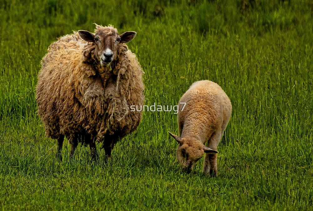 Watchful Ewe by sundawg7
