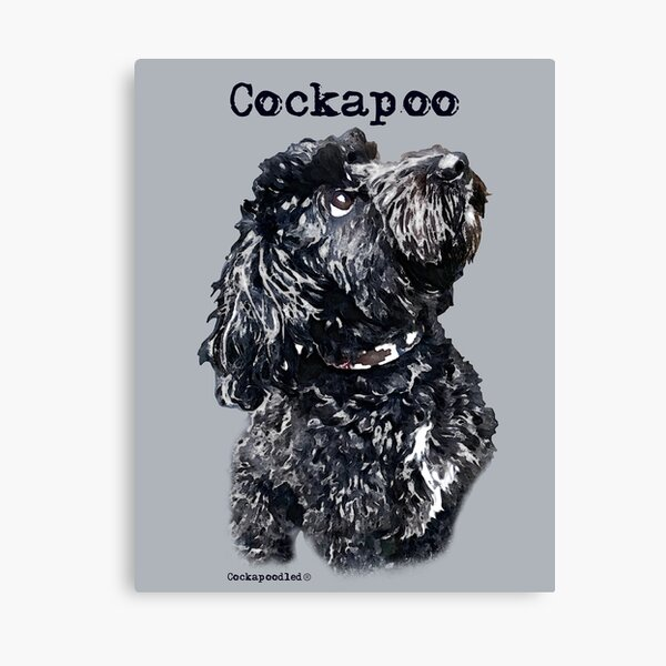 Black Cockapoo Dog Canvas Print