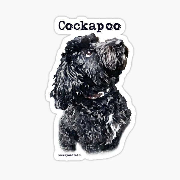 Black Cockapoo Dog Sticker