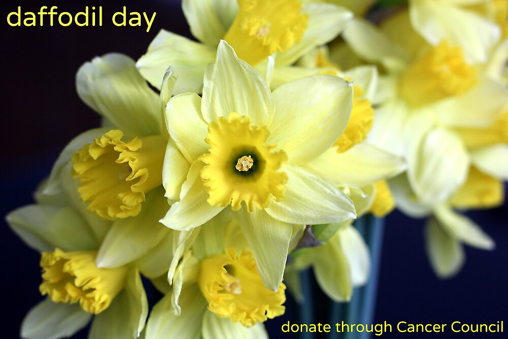Daffodil Day by bigtreephoto