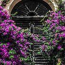 Purple morning everyday by Sotiris Filippou