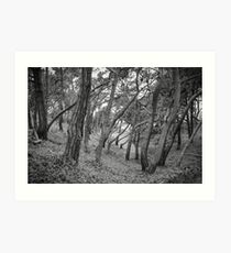 Baker Beach Trees Art Print