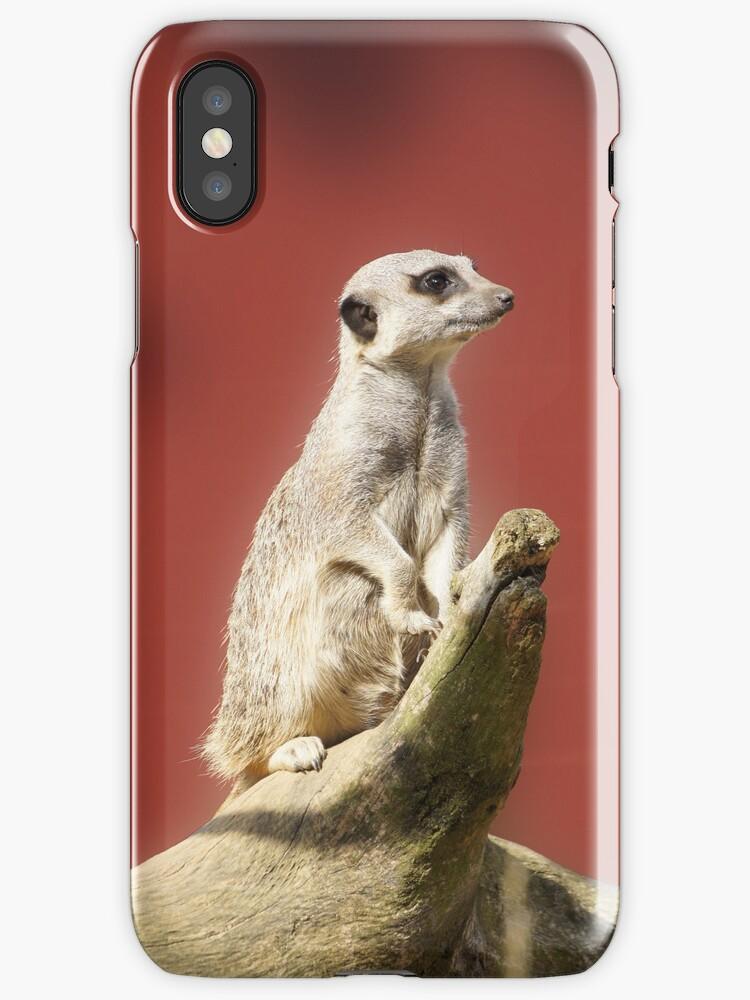 Meerkat by ouroboros888