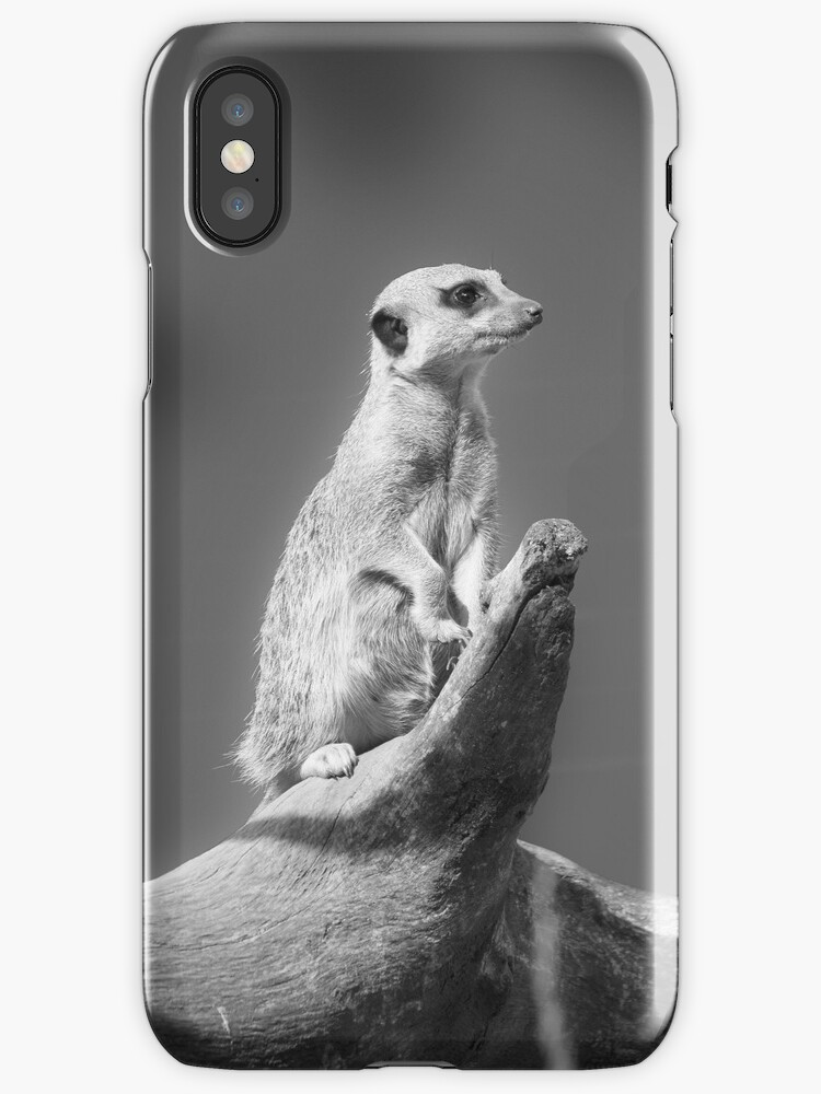 Meerkat Black and White by ouroboros888