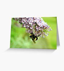 White Tailed Bumblebee - London Greeting Card