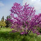 Juda's Tree by Uri Baruch
