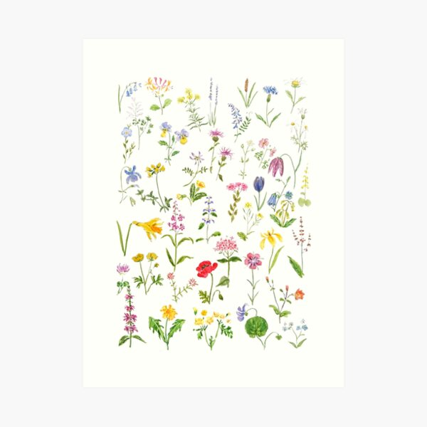 botanical colorful countryside wildflowers watercolor painting Art Print