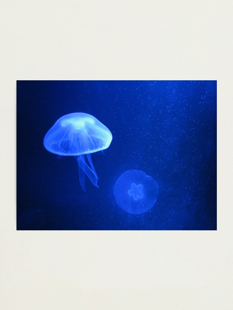 Alternate view of Blue Jellyfish Photographic Print