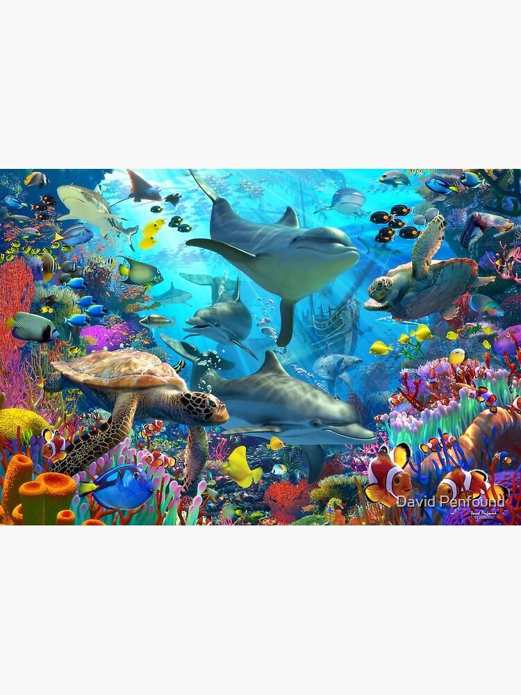 Dolphin Playground by DavidPenfound