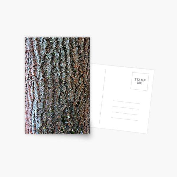 Classic wood pattern  Postcard