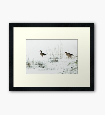 Into the white, wide world Framed Print
