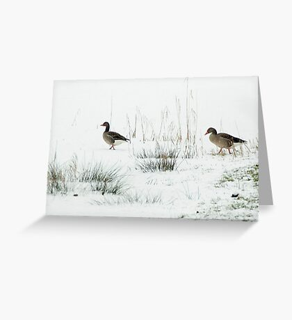 Into the white, wide world Greeting Card