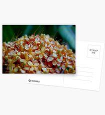 Tropical flora Postcards